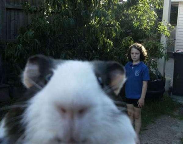 animaux-photobomb (28)