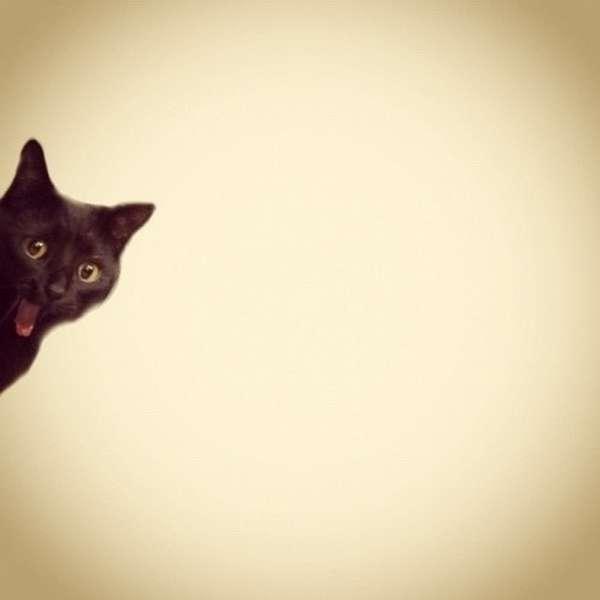 animaux-photobomb (5)