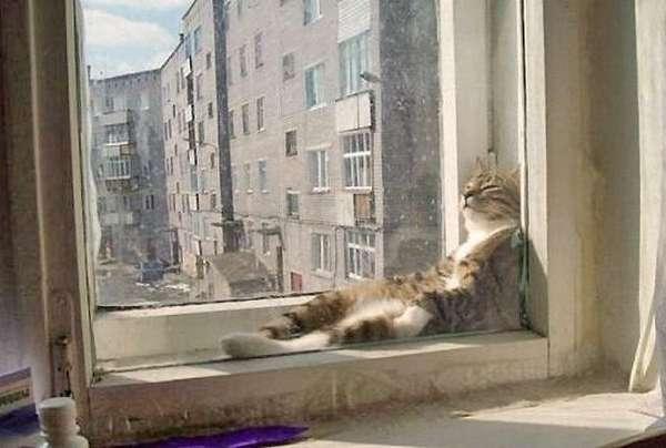 chat-assis-humain (10)