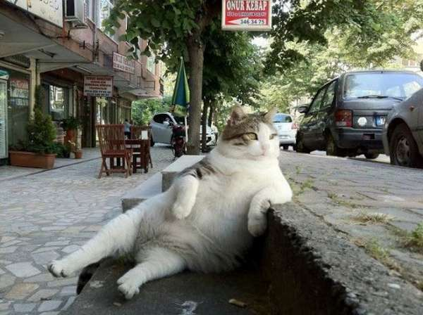 chat-assis-humain (13)