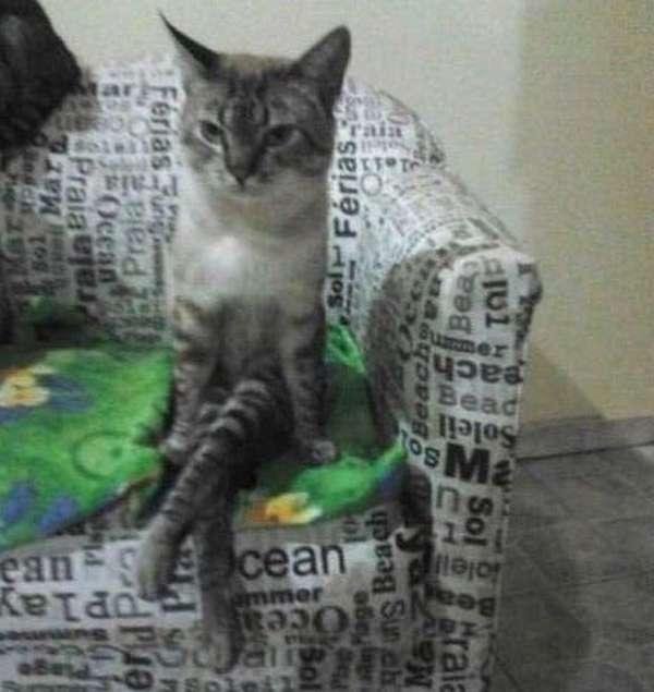 chat-assis-humain (15)