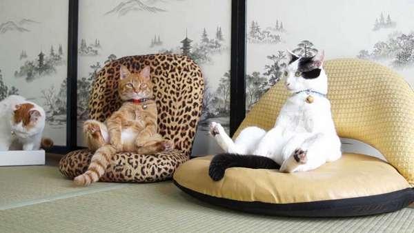 chat-assis-humain (17)