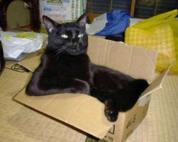 chat-assis-humain (19)