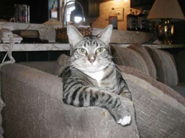Funny Pictures of Cats and Kittens