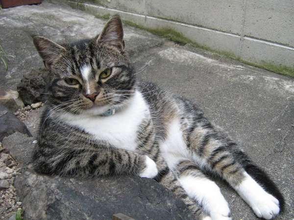chat-assis-humain (3)