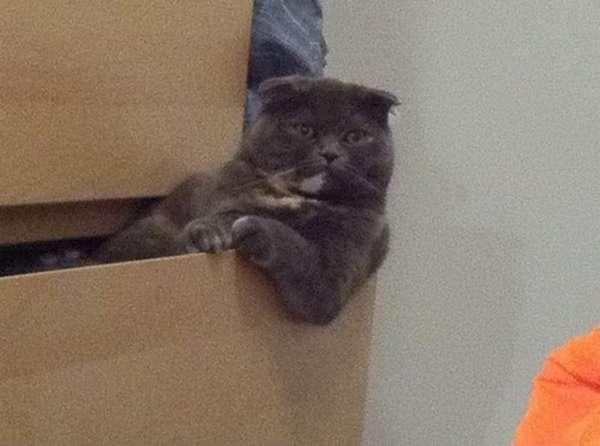 chat-assis-humain (4)