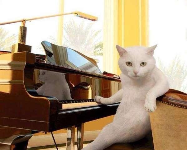 chat-assis-humain (5)