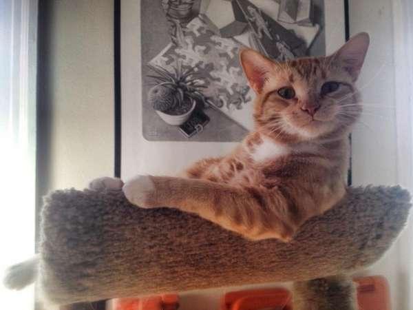 chat-assis-humain (8)