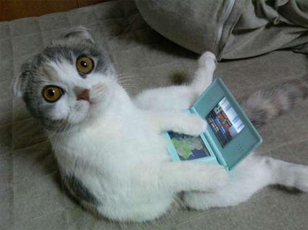 chat-assis-humain (9)