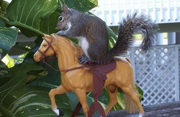 http://cutearoo.com/2011/04/29/ride-em-cowboy/