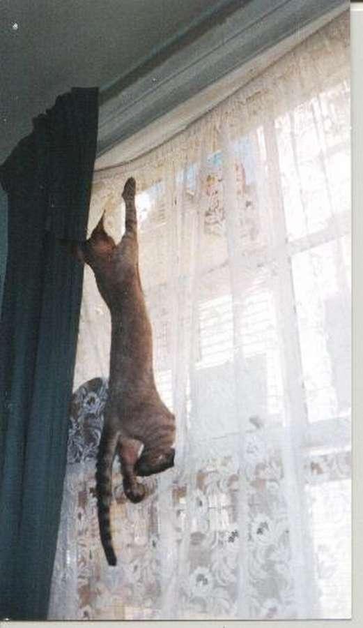 http://cindykucing.blogspot.fr/2011/08/how-to-stop-cat-climbing-curtains.html
