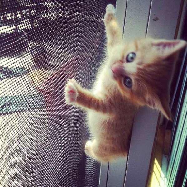 chat-grimpe-partout (18)
