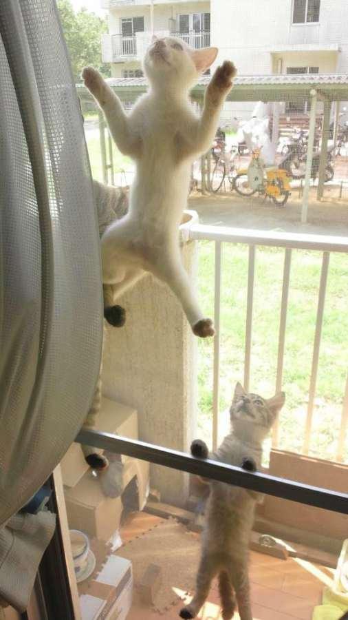 chat-grimpe-partout (19)