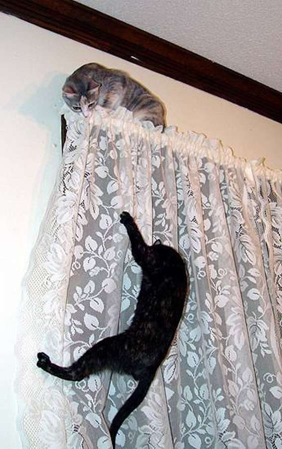 http://shitmypetdestroyed.tumblr.com/post/653830158/my-cats-midnight-and-minnie-destroyed-my-curtains