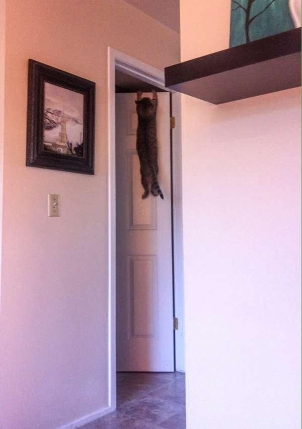 chat-grimpe-partout (7)