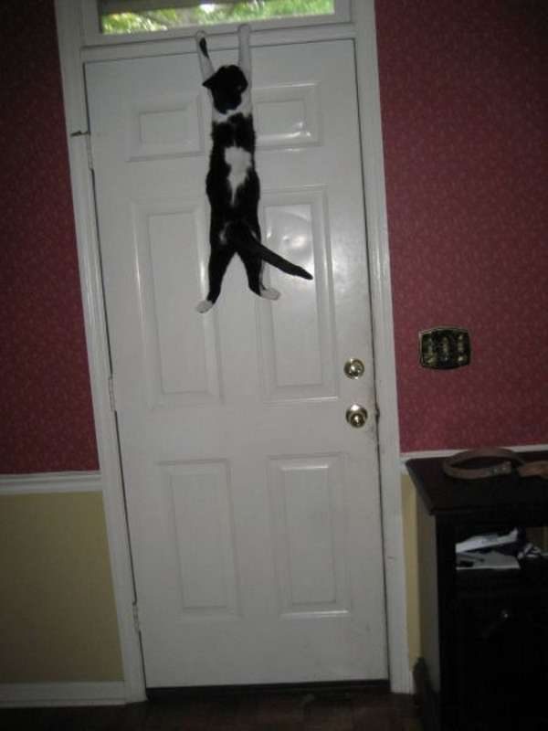 chat-grimpe-partout (9)