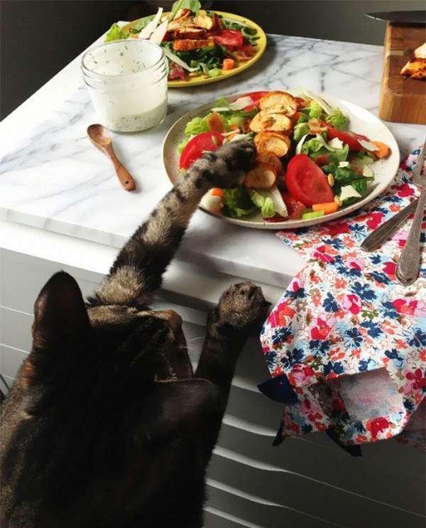 chat-vole-nourriture (10)