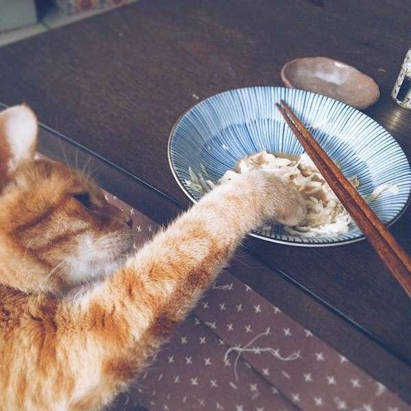 chat-vole-nourriture (11)