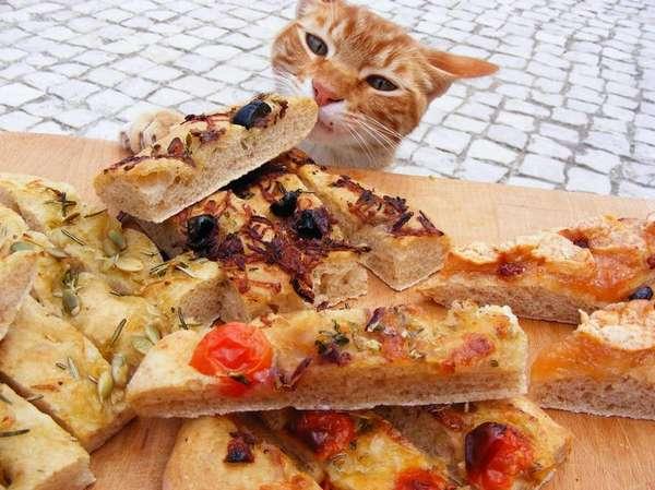 chat-vole-nourriture (14)