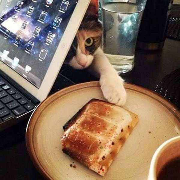 chat-vole-nourriture (16)