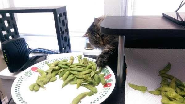 chat-vole-nourriture (18)