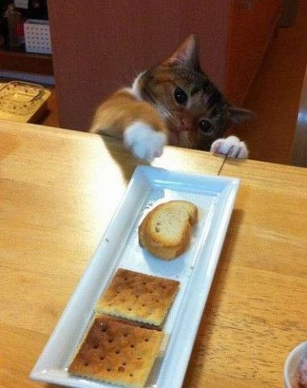 chat-vole-nourriture (2)