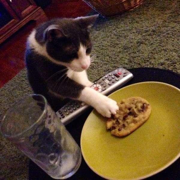 chat-vole-nourriture (20)