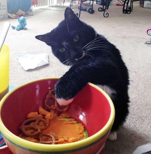 chat-vole-nourriture (23)