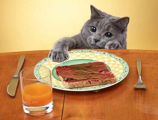 chat-vole-nourriture (24)
