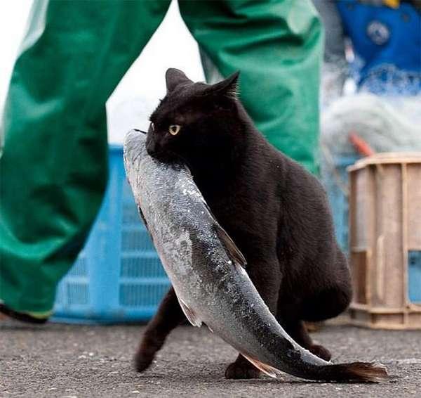 chat-vole-nourriture (29)