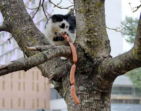 chat-vole-nourriture (30)