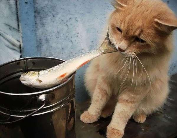 chat-vole-nourriture (35)