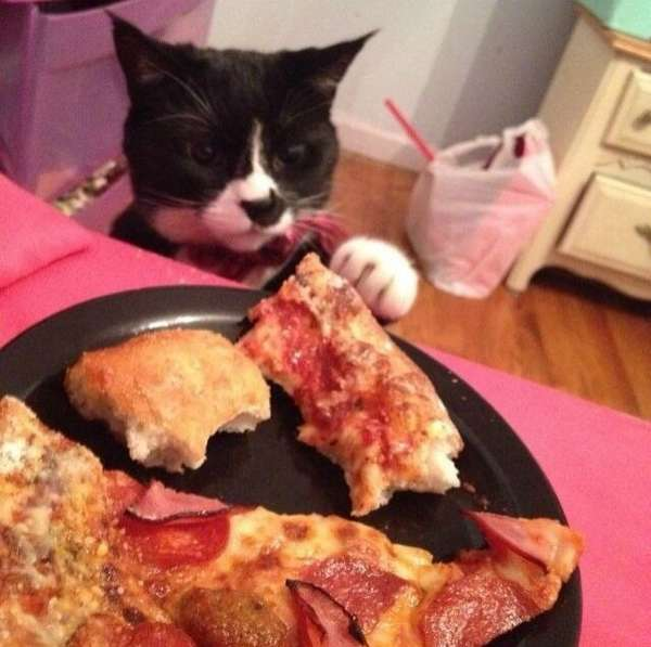 chat-vole-nourriture (5)