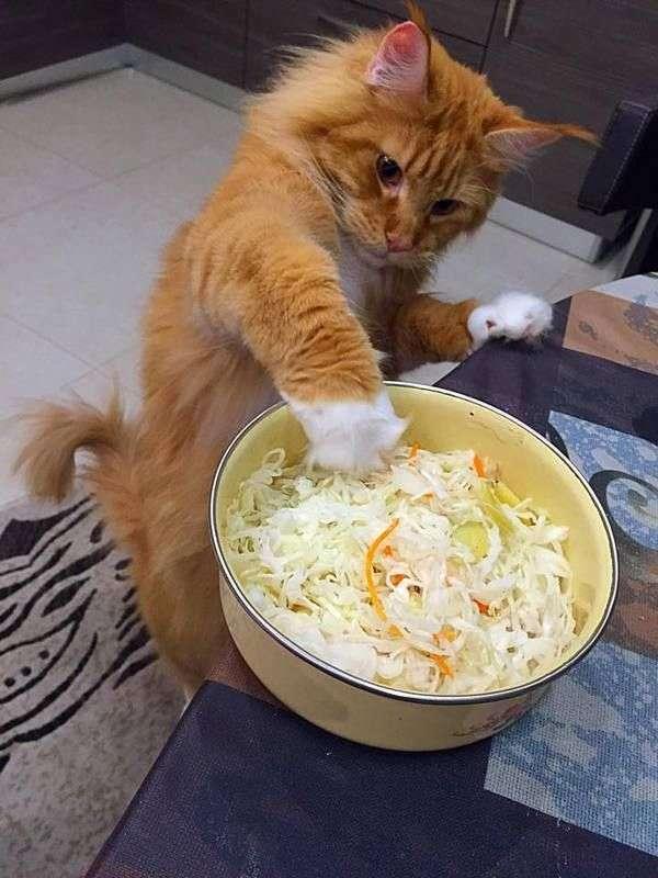 chat-vole-nourriture (7)
