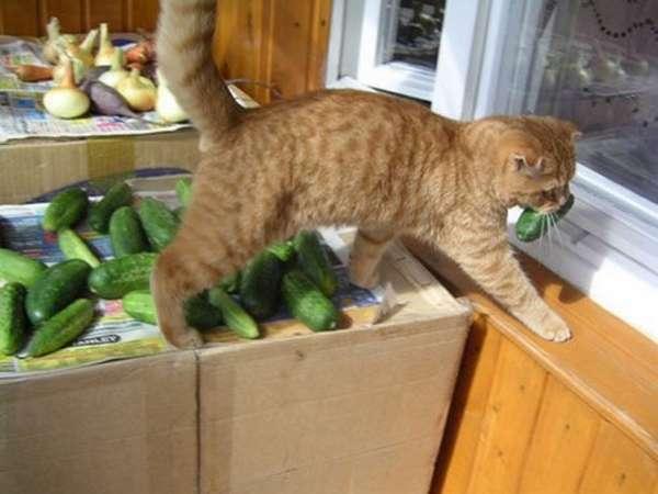 chat-vole-nourriture (9)