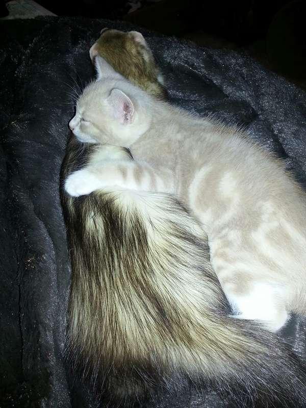 chaton-furets (17)
