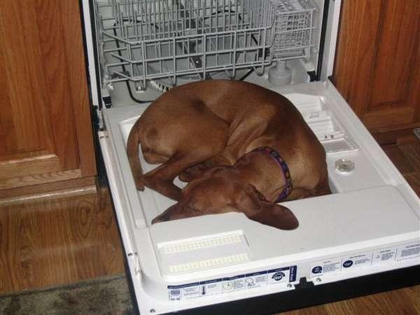 chien-chat-endormis-nimporte-ou (10)