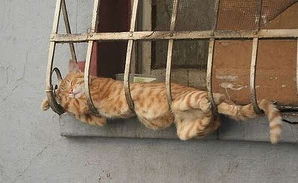 http://taildom.com/blog/pictures/cats-can-sleep-anywhere-really/