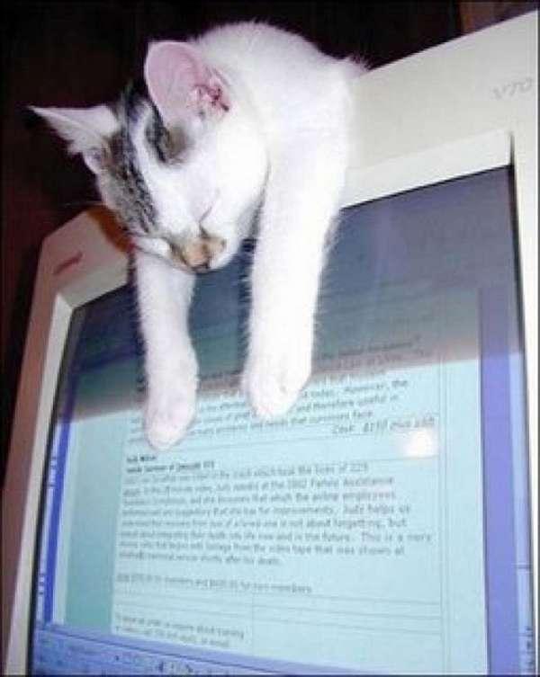 chien-chat-endormis-nimporte-ou (25)