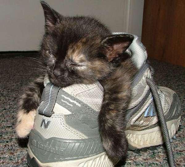 chien-chat-endormis-nimporte-ou (29)