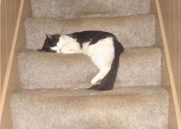 chien-chat-endormis-nimporte-ou (3)