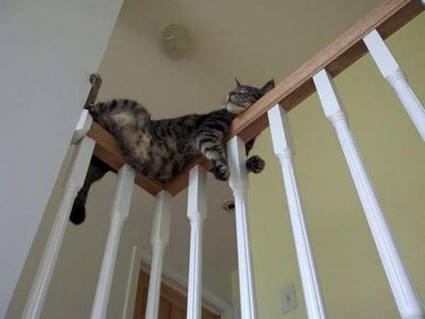 chien-chat-endormis-nimporte-ou (30)