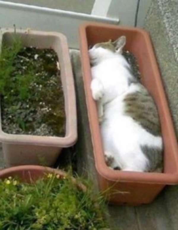 chien-chat-endormis-nimporte-ou (37)