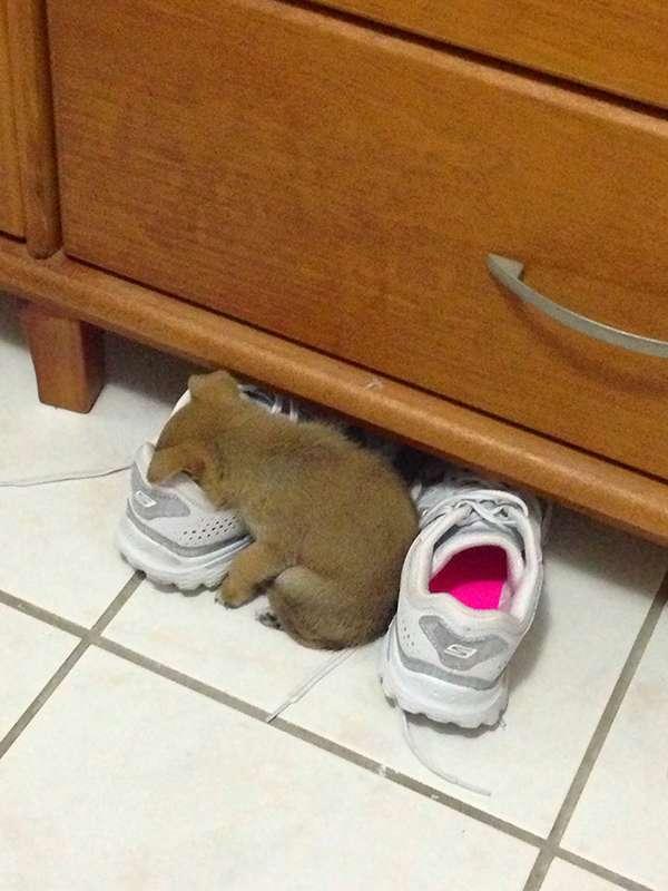 http://www.boredpanda.com/cute-puppies-sleeping-dogs-funny-locations/