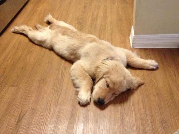chien-chat-endormis-nimporte-ou (49)