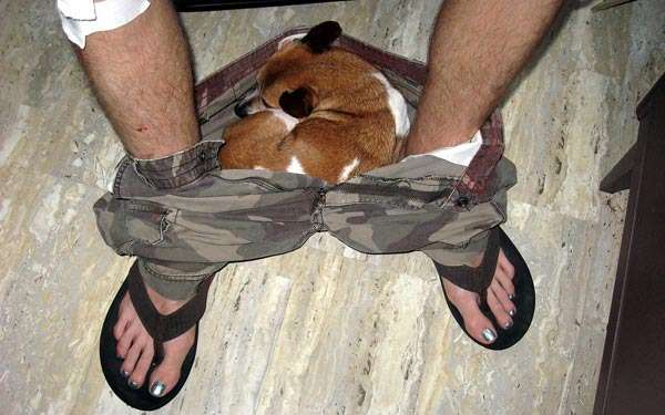 http://www.caninest.com/funny-dog-pictures/