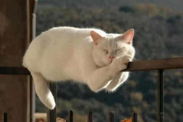 chien-chat-endormis-nimporte-ou (52)