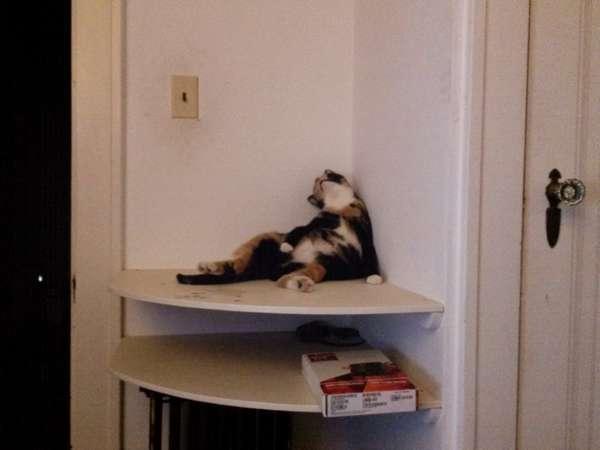 chien-chat-endormis-nimporte-ou (53)