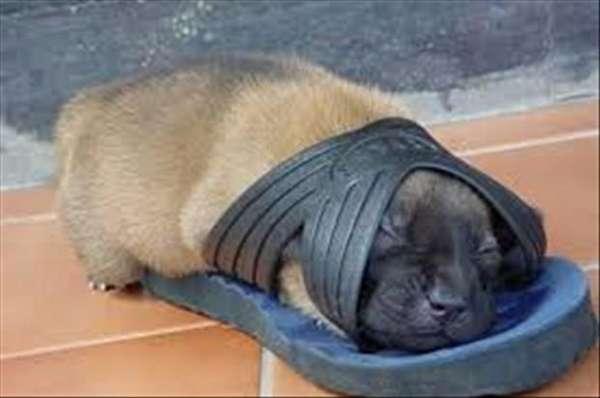chien-chat-endormis-nimporte-ou (7)