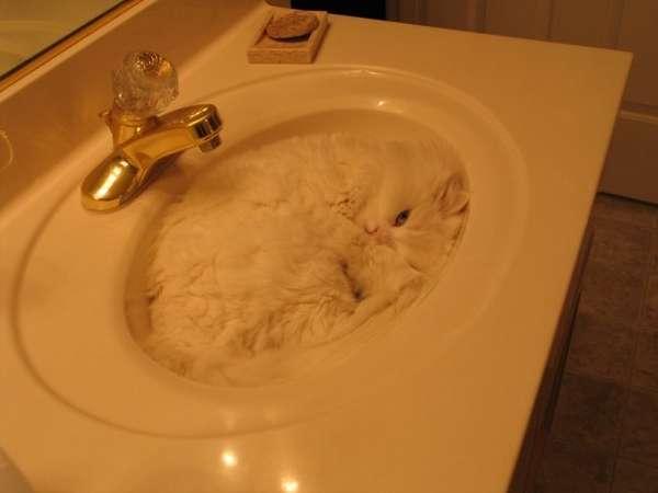 chien-chat-endormis-nimporte-ou
